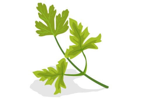 Nutritious-Vegetables-Parsley-CircleCare