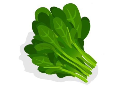 Nutritious-Vegetables-Spinach-CircleCare