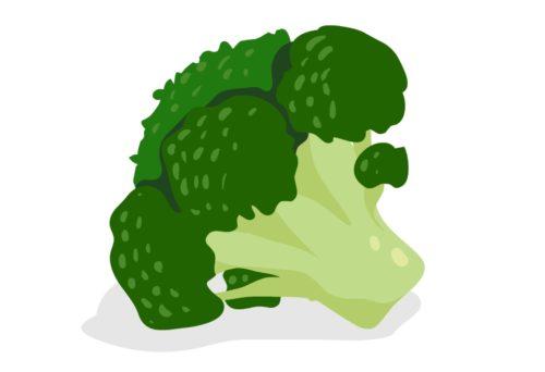 Nutritious-Vegetable-Broccoli-CircleCare