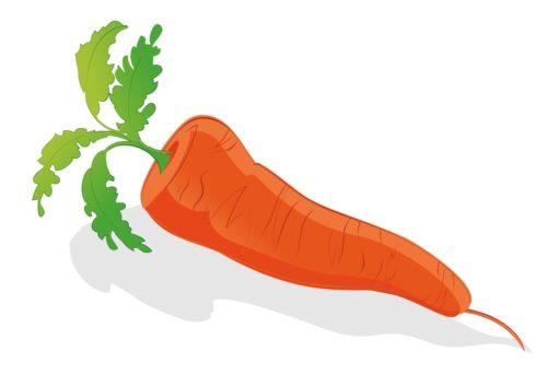 Nutritious-Vegetable-Carrots-CircleCare