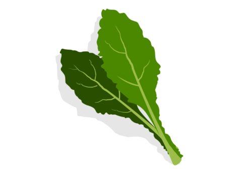 Nutritious-Vegetable-Kale-CircleCare